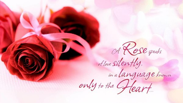 A rose speaks of love silently in a language known only to the heart