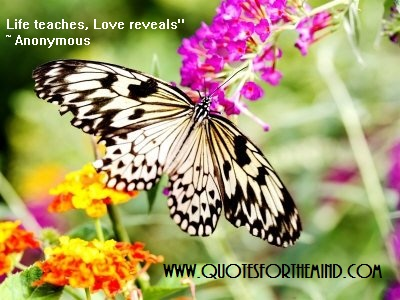 Life Teaches Love Reveals