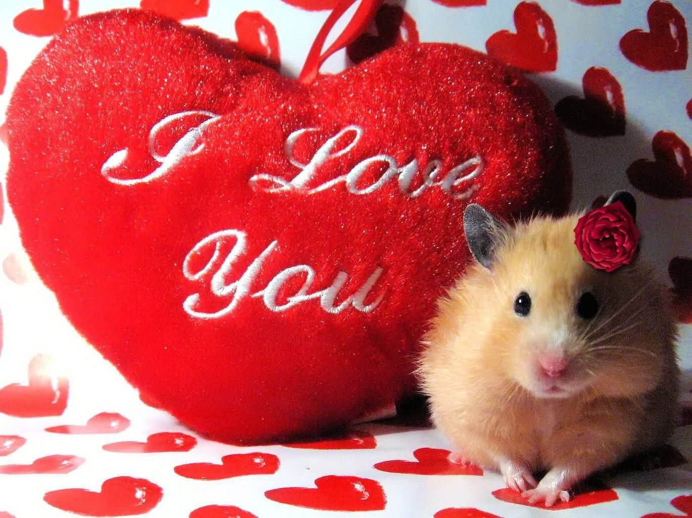 Lovely I Love You Picture