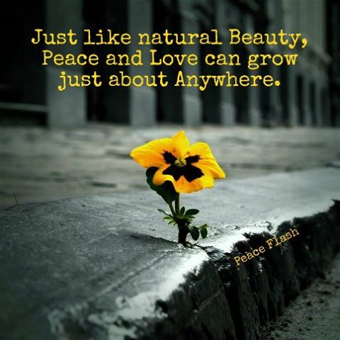 Brilliant Nature Quotations and Quotes