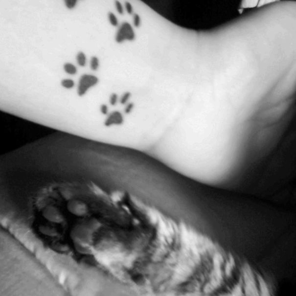 Charming Cat Tattoos Designs