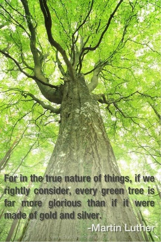 Exclusive Nature Sayings