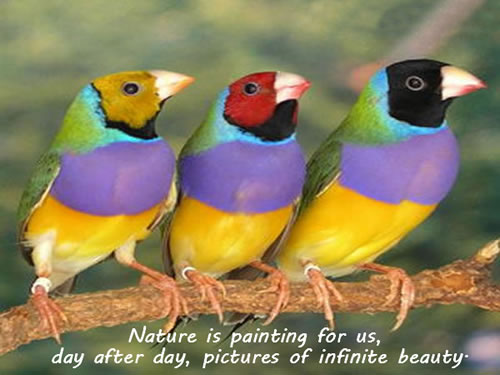 Incredible Nature Quotations and Quotes