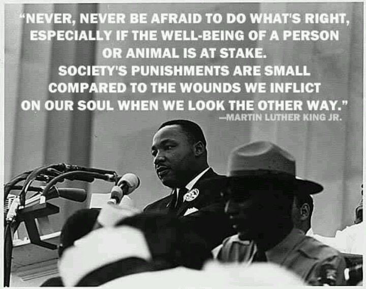 New Martin Luther King Jr Quotes