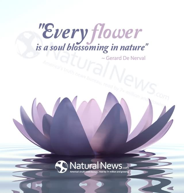Outstanding Nature Quotations and Quotes