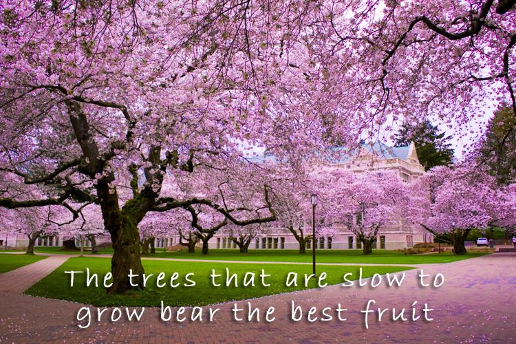 Stunning Nature Quotes