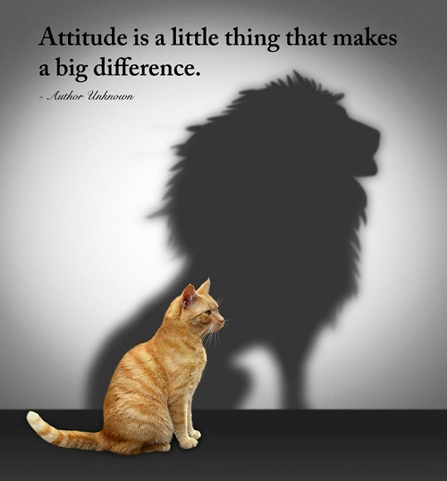 Cute Attitude Quotation
