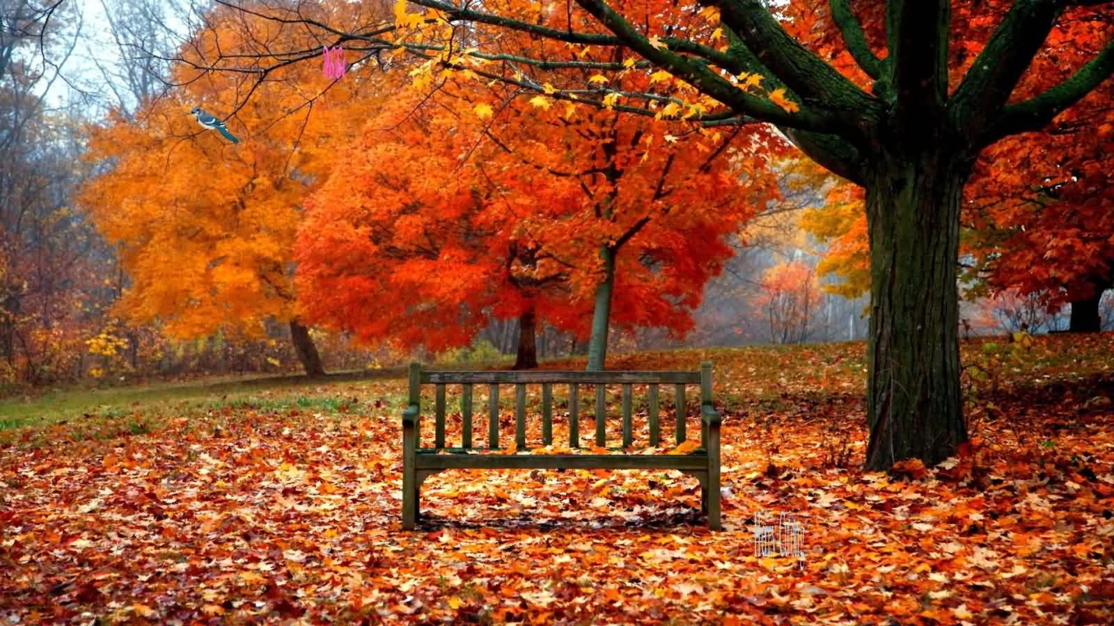 100 Beautiful First Day Of Fall Quotes & Happy First Day Of ...